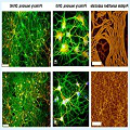 Superior Nanofiber Substrates for  Long-Term Culturing of Primary Neurons